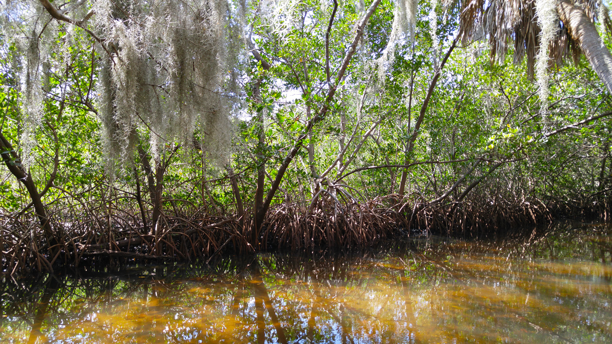 Make a Donation to Weedon Island Preserve